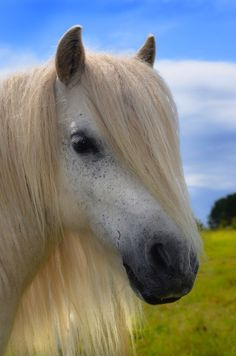 Horses have great hair. Better than yours, in fact. Have you ever been able to achieve this level of side-swept bang ferocity? | 20 Horses With Better Hair Than You