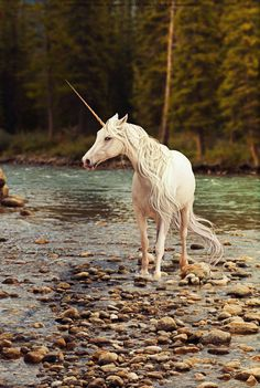 Forest Unicorn Elisha she has a fierce temper and likes stones .......?!