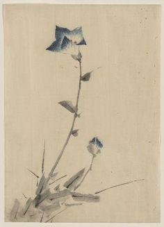 "sumi-no-neko: "" 葛飾 北斎 Katsushika Hokusai (1760 - 1849) Blue flower blossom and bud at the end of a stalk, between 1830 and 1850 """