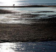 """Lone Rider"" by Pierre-Paul De Beir #art #artphotography #photography #tictacartcollection #horse #pierrepauldebeir"