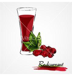 Redcurrant juice on VectorStock