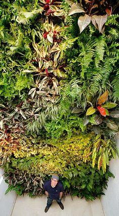 Jardin Vertical, ... www.Ecoyaab.com