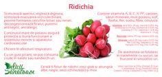 Radish @DeliciiSanatoas