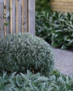 Untitled A Mediterranean Inspired Design Have you ever really thought about how many people see the outside of your home? Landscaping Tools, Coastal Landscaping, Modern Landscaping, Front Yard Landscaping, Outdoor Plants, Garden Plants, Outdoor Gardens, Moon Garden, Dream Garden