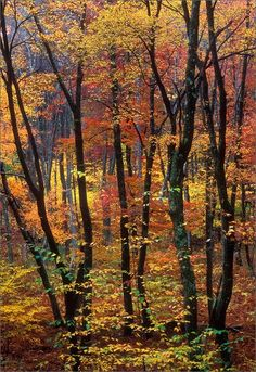 Just another world and universe citizen. Modern Pictures, Nature Pictures, Tree Tunnel, Fall Candy, Autumn Lights, Autumn Scenery, Woodland Forest, Autumn Cozy, Walk In The Woods