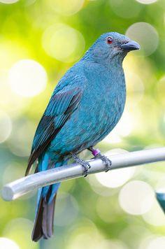 Bluebirds are SO pretty!