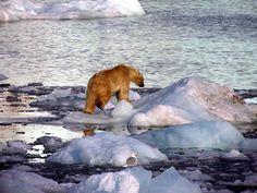 Un mundo perdido en el Ártico (Svalbard) – 101 Lugares increíbles