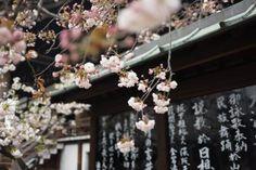 Japan images - Free stock photos on StockSnap.io