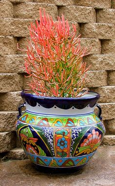 Euphorbia Firestick in a Talavera pot by nadiaknows, via Flickr.  Capture the spirit of Mexico at http://www.lafuente.com/Mexican-Decor/Talavera-Pottery/Talavera-Planters/