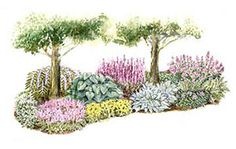 Featuring easy-growing perennial flowers such as hosta, bleeding heart, and hellebore, this garden plan is the perfect way to add color to a shaded spot in your yard.