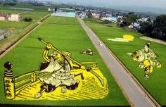 Rice Paddy Art - Ushiwakamaru - Also known as Minamoto no Yoshitsune, this 12th Century warrior is revered as one of the greatest fighters in the history of Japan. The young but skilled swordsman was featured in Inakadate in 2010 alongside the hulking Benkei, who he defeated in a legendary sword fight. (Photo: dailyartfixx)