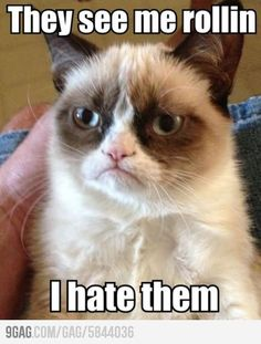 This dang cat cracks me up every time. Haha