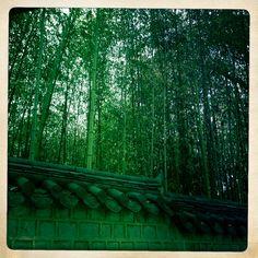 Cheongju - Bamboo