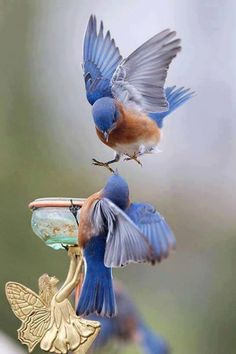 Don't forget when designing your garden that you won't be the only one using it.  Remember to make a space for wildlife to enjoy your little slice of nature. - Bluebirds in the garden.