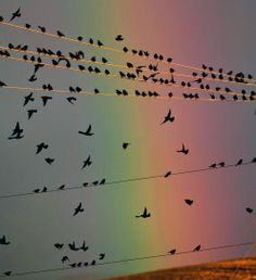 Birds fly from power lines in front of a rainbow just north of Walla Walla, Wash on Sept 25. (Greg Lehman/Walla Walla Union-Bulletin via Associated Press)