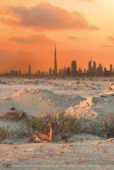 Dubai from the desert with Goitered gazelle or sand gazelle