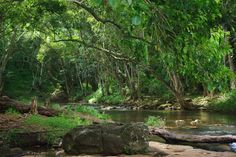 One of the last few remaining secrets on Kauai, it's accessed by an unmarked trail in a quiet residential neighborhood inland behind the historic eastern town of Kapa'a, and it's one of Kauai's best waterfall hikes. It's more of a peaceful river walk through the jungle, a place where crowds won't be met, but serenity will.