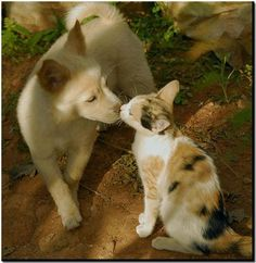Cats and dogs do like each other! (more then they should)