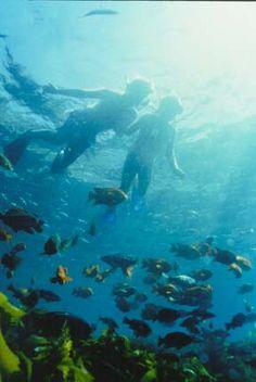 Snorkeling at Catilina Island