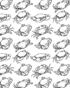 80% Off Sale crab pattern including seamless. Hand drawn crab vector. seafood with clipping path. seafood sketch. (EPS, JPG)