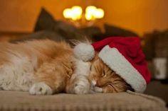 Cucho navideño