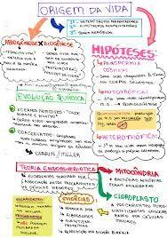 Resultado de imagem para mapas mentais de filosofia