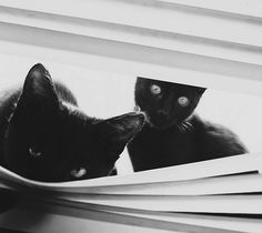 Beautiful picture of black cats. I love them. No evil even this picture. The Incensewoman
