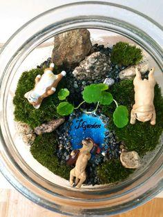 mossarium/moss terrarium