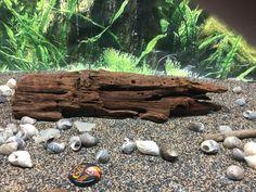 "Aquarium Driftwood 11"" X 3.25"" X 2.5""  Malaysian Driftwood #driftwood #fishtank  http://www.ebay.com/itm/-/182243821437?roken=cUgayN&soutkn=q9PhBm eBay"
