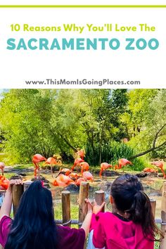 Sacramento mom shares with you the reasons why you should visit the local zoo. California Attractions, California Restaurants, California Vacation, California With Kids, Moving To California, Sacramento Zoo, African Giraffe, San Diego Zoo, Travel With Kids