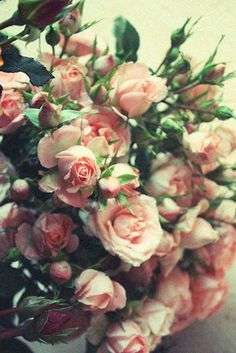 smell of roses