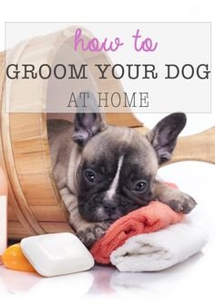 How to Groom Your Dog at Home Learn tips and techniques on how to groom your dog at home. From bath to nail clipping and hair shaving, follow these easy steps to groom your dog safely.