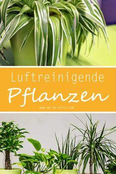 gr nlilie urban jungle pinterest pflanzen garten und garten pflanzen. Black Bedroom Furniture Sets. Home Design Ideas