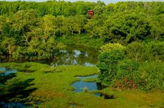 Visit the mangroves and wetland swamp of Kuala Selangor Nature Park to see raptors, water birds, mudskippers, fiddler crabs and monkeys.    A good day outing from KL in combination with the fireflies at Kampung Kuantan and some good local seafood eats while you wait for the sun to go down.