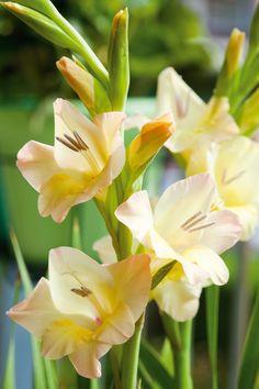 http://picture.flowercouncil.org/en