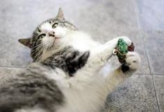 Working cat parents often worry about their cats being bored when left home alone all day, then becoming mischievous and destructive. Toys like catnip cigars, a talking ball, or a Birdland DVD will keep cats happy and out of trouble.