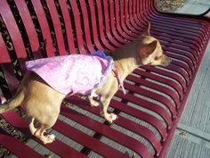 Dog Dress. Pet Dress Dog clothes Dog Paisley Pink by www.etsy.com/shop/BellaDoggie