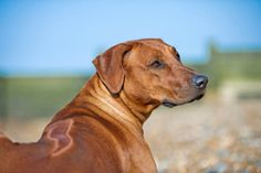 6 Dog Breeds With Secret Superpowers   Cracked.com