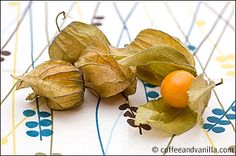 Physalis / Cape Gooseberry / Ground Cherry / Mexican Tomato