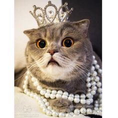 From @melissa_scottish: Queen of the cats #catsofinstagram [source: http://ift.tt/1Qwc1bd ]