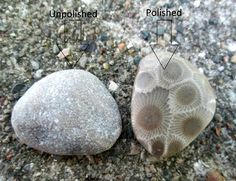 Best Place To Find Petoskey Stones In Traverse City - The Best Types Of Stone Minerals And Gemstones, Rocks And Minerals, Rock Identification, Rock Tumbling, Petoskey Stone, Rock Hunting, Rock Jewelry, Rock Collection, Mineral Stone
