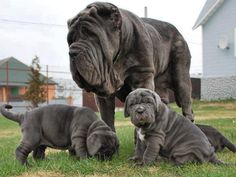 Yea! Look at those wrinkles! Can't wait to get one someday.