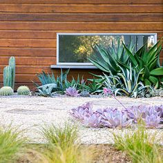 Graphic beds of cacti and succulents