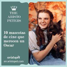 Hay pelis en las que los animales tienen un papel fundamental, pelis en las que los protagonistas tienen mascotas que son, sencillamente, memorables. Visita nuestra nota y descubre cuáles son las mascotas más cinematográficas y que, probablemente, ¡merecen su Oscar! http://aristopet.com/aristopeters/10-mascotas-de-cine-que-merecen-un-oscar-i/