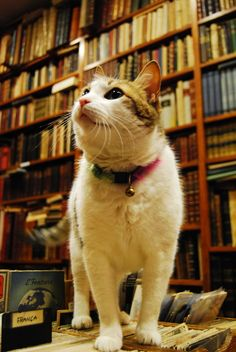 Seuss, the bookshop cat.