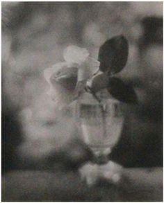 Rose in Glass by Josef Sudek