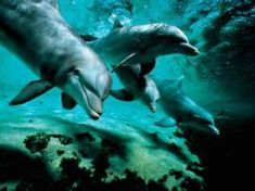 "Dolphin Fun! myhawaiivacationp... Vacation Packages At Deep Discounts"" See How Much You'll Save On Your Hawaii Vacations! Save Over 20% On Hawaii Travel Get A Fast Quote Here!  >>http://myhawaiivacationpackage.com/"