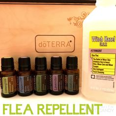 Fleas can be your dogs worst enemy!! Help him fight back with Doterra essential oils! Combine 20 drops TerraShield, 20 drops Lemongrass, 10 eucalyptus, 10 Lavender, 10 Peppermint to 4 oz distilled water and 4 oz witch hazel, in a spray bottle. Spray along dogs spine, legs and thick haired areas. Avoid eye contact. Re-apply as needed! In addition, Lavender is great for irritated skin conditions.