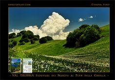 PASSEGGIATE A LEVANTE - VAL TREBBIA Le fioriture dei Narcisi al Pian della Cavalla nel Parco dell'Antola