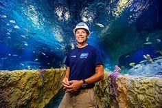 O Sea Life Orlando Aquarium recebeu o primeiro grupo de peixes que habitarão a atração que será inaugurada no dia 04 de maio de 2015. Todos os peixes foram devidamente aclimatados nas águas do aquário antes de serem...